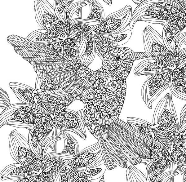 Graphics Drawing - Black And White Hummingbird by MGL Meiklejohn Graphics Licensing