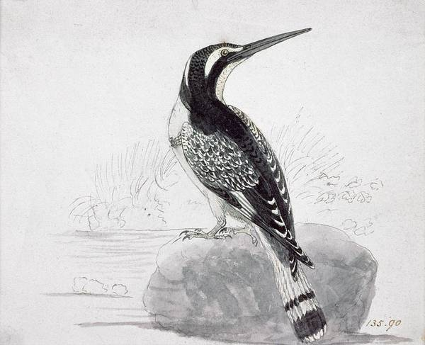 Wall Art - Painting - Black And White Kingfisher by Thomas Bewick
