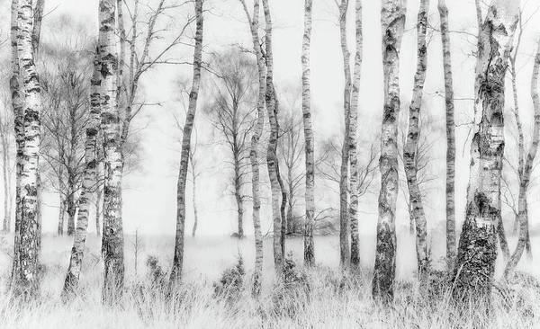 Misty Photograph - Black And White by Nel Talen