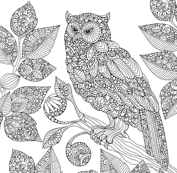 Graphics Drawing - Black And White Owl by MGL Meiklejohn Graphics Licensing