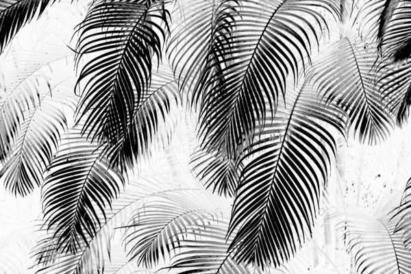 Palm Frond Digital Art - Black And White Palm Fronds by Karon Melillo DeVega