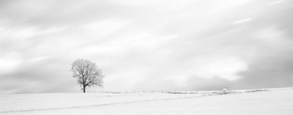 Photograph - Black And White Panorama Tree  by U Schade