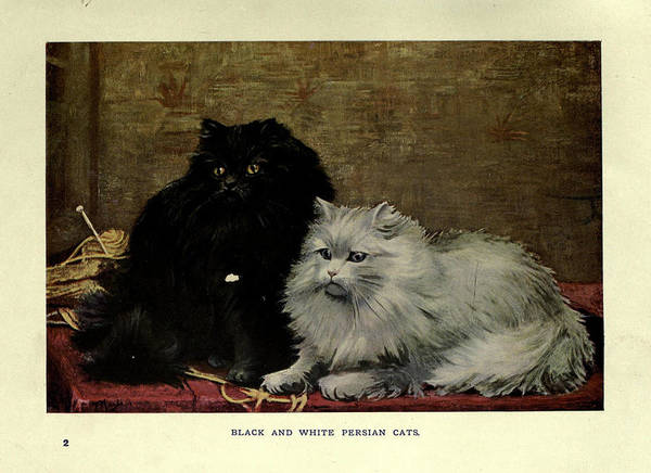 Manx Cat Wall Art - Painting - Black And White Persian Cats by Philip Ralley