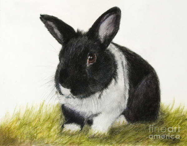 Art Print featuring the painting Black And White Pet Rabbit by Kate Sumners