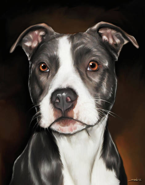 Painting - Black And White Pit Bull Terrier by Michael Spano