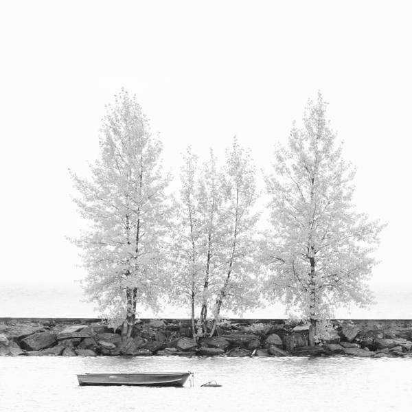 Photograph - Black And White Square Diptych Tree 12-7693 Set 1 Of 2 by U Schade