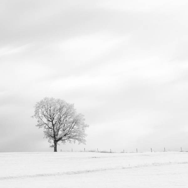 Photograph - Black And White Square Diptych Tree 13-0747 Set 1 Of 2 by U Schade
