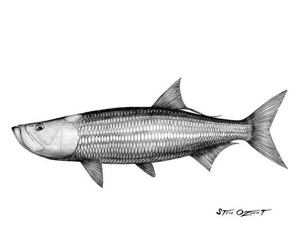 Drawing - Black And White Tarpon by Steve Ozment