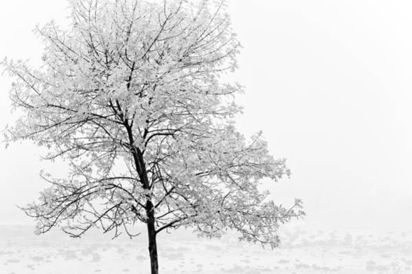 Photograph - Black And White Tree  by U Schade