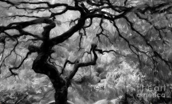 Wall Art - Photograph - Black And White Tree Art by Heinz G Mielke