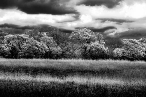 Photograph - Black And White Trees by Darryl Dalton