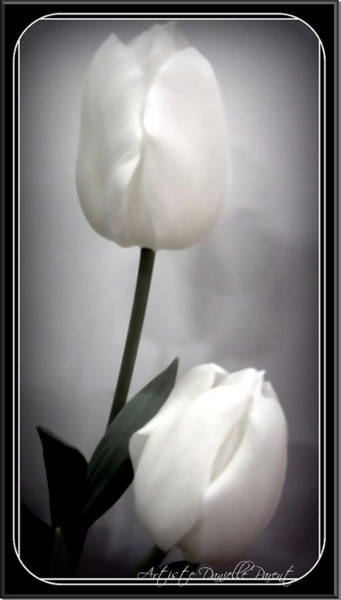 Black And White Tulips  Art Print