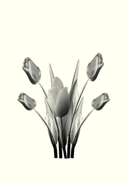 Digital Art - Black And White Tulips Drawing by David Dehner