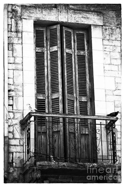 Photograph - Black And White Watchers II by John Rizzuto