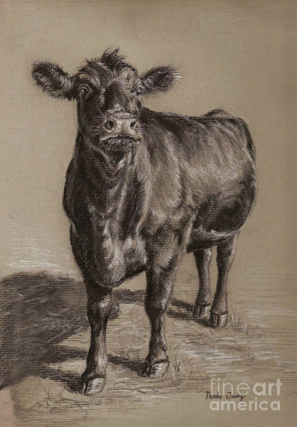 Cows Wall Art - Drawing - Black Angus Cow 1 by Nicole Troup
