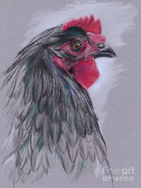 Pastel - Black Australorp Hen by MM Anderson