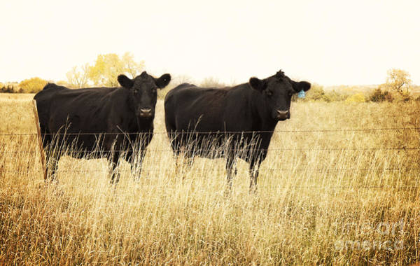 Photograph - Black Beauties by Pam  Holdsworth