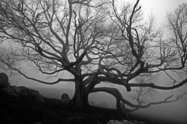 Photograph - Black Birch In The Fog by Jim Dollar
