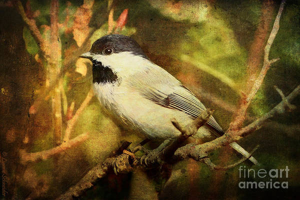 Bird Watching Digital Art - Black Capped Chickadee by Lianne Schneider