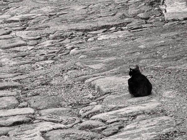 Photograph - Black Cat On Weathered Cobblestones by Menega Sabidussi