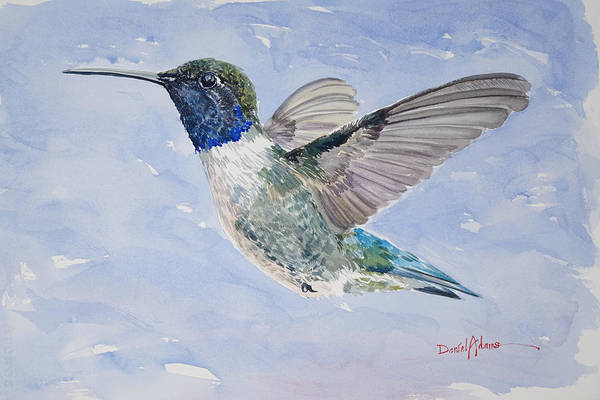Painting -  Da194 Black Chinned Hummingbird By Daniel Adams by Daniel Adams