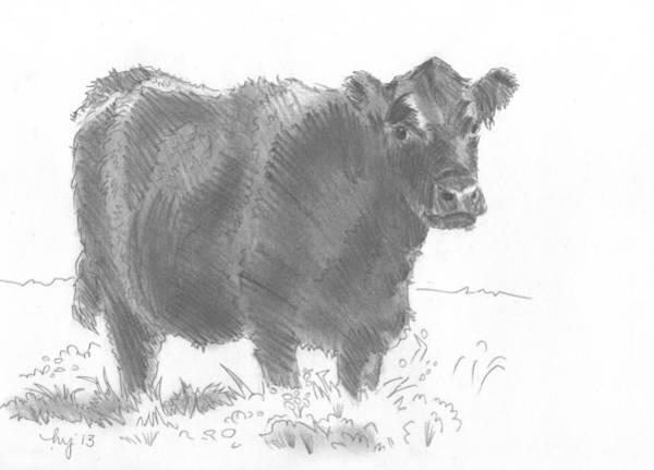 Black Cow Pencil Sketch Art Print