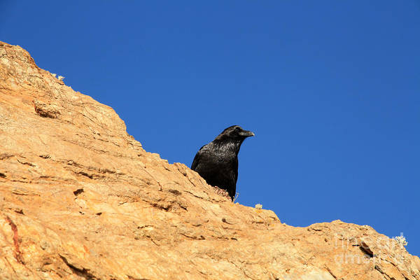 Wall Art - Photograph - Black Crow Sentinel by Juan Romagosa