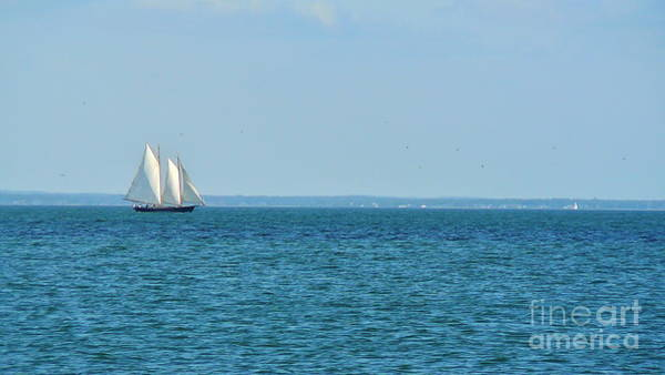 Squid Row Photograph - Black Dog Sailboat In The Sound by Matt Dana