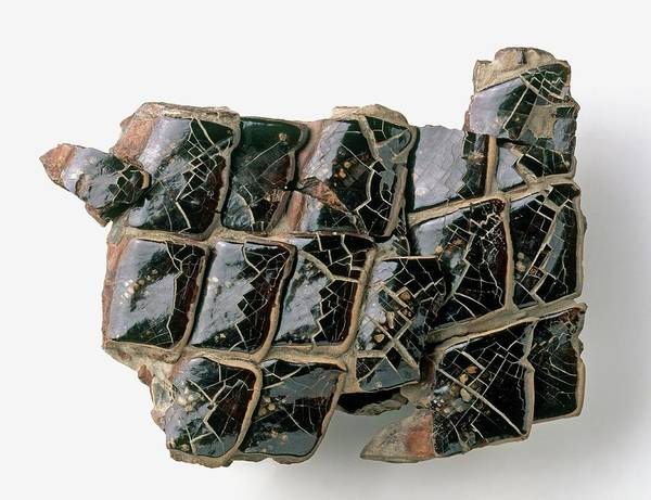 Cretaceous Wall Art - Photograph - Black Enamel Lepidotus Fossil Fragment by Dorling Kindersley/uig