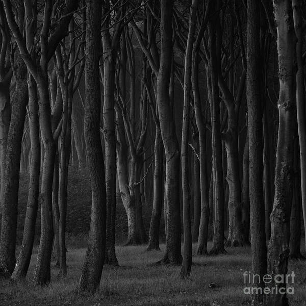 Photograph - Black Forest by Heiko Koehrer-Wagner
