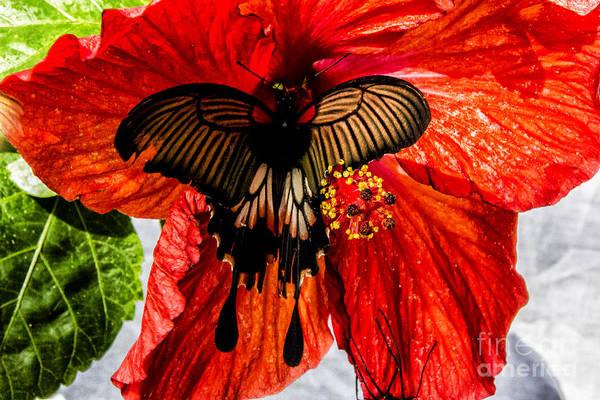 Wall Art - Digital Art - Black Birdwing On Red by Georgianne Giese