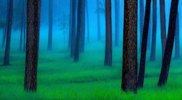 Wall Art - Photograph - The Black Hills Forest by Kadek Susanto