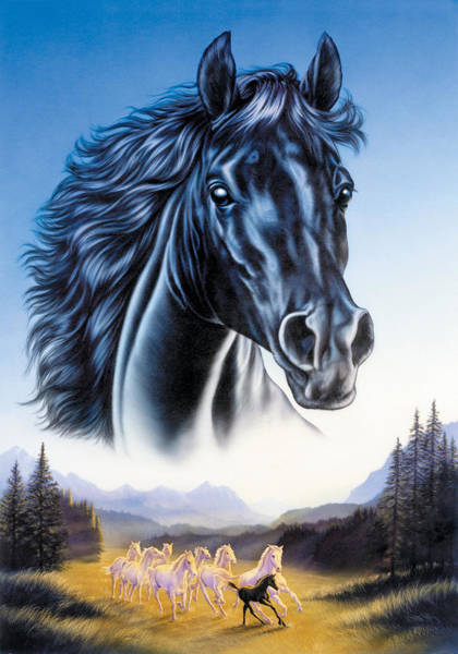 Andrew Farley Photograph - Black Horse And Herd by MGL Meiklejohn Graphics Licensing