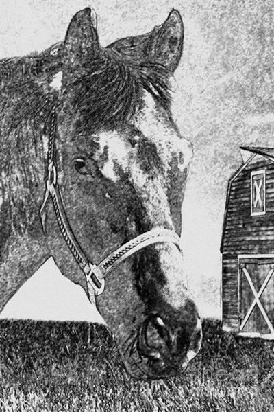 Photograph - Black Horse by Gunter Nezhoda