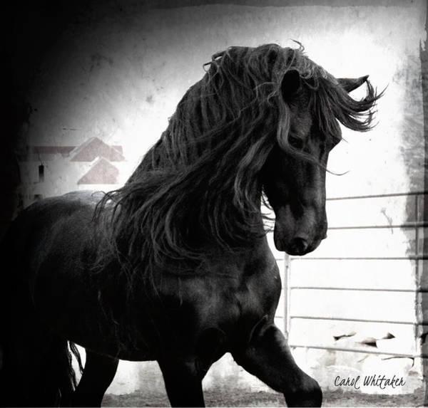 Photograph - Black Knight Stallion by Carol Whitaker