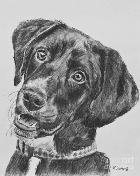 Drawing - Black Lab Puppy Charcoal Sketch by Kate Sumners