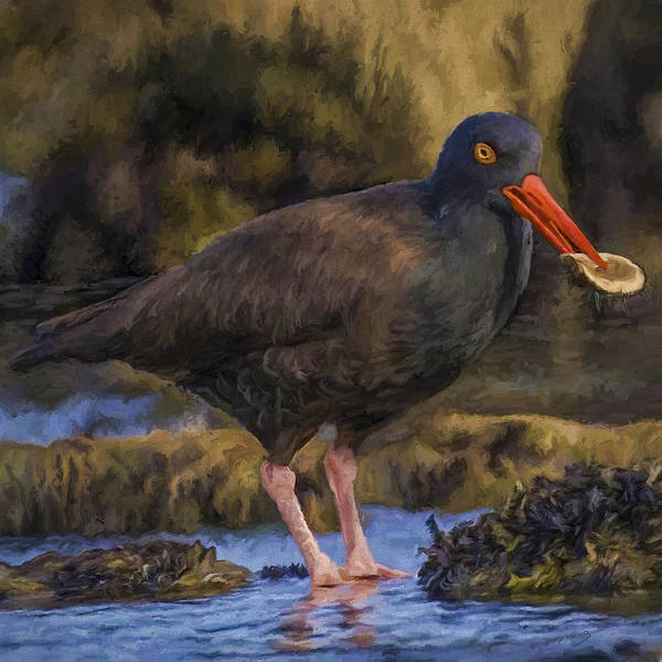 Wall Art - Painting - Black Oystercatcher by David Wagner
