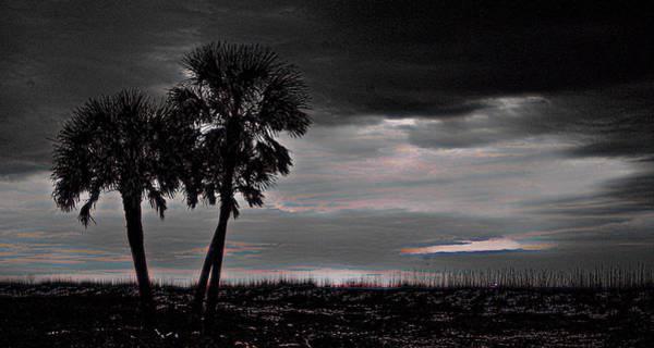 Wall Art - Digital Art - Black Palms by Michael Thomas