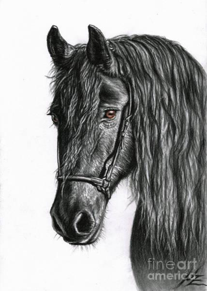Friesian Drawing - Black Pearl by Nicole Zeug