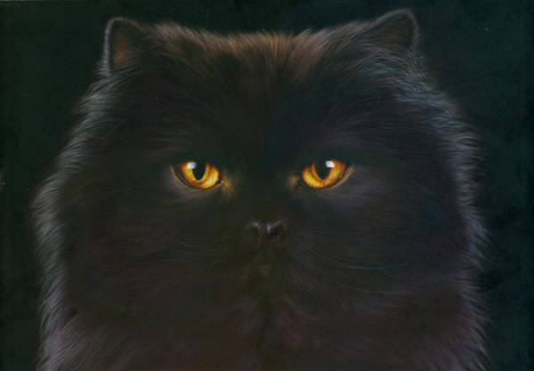 Animal Portrait Photograph - Black Persian by MGL Meiklejohn Graphics Licensing