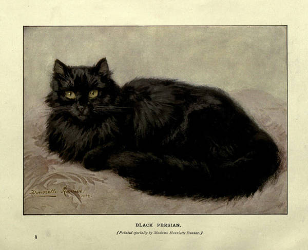 Manx Cat Wall Art - Painting - Black Persian by Philip Ralley