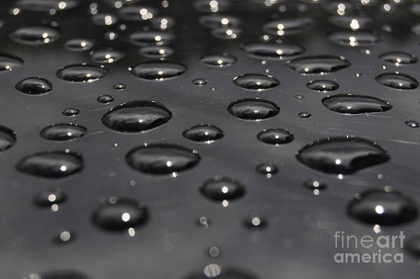 Photograph - Black Rain by Staci Bigelow