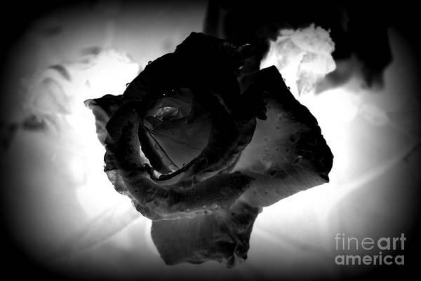 Photograph - Black Rose by Rachael Shaw