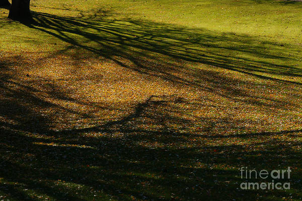 Photograph - Black Shadows by Linda Shafer