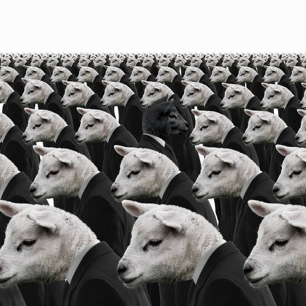Out Of Business Wall Art - Photograph - Black Sheep Amongst White Sheep by Andrew Bret Wallis