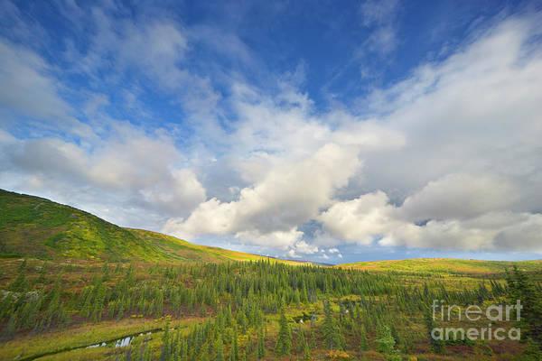 Boreal Forest Photograph - Black Spruce On Fall Tundra  by Yva Momatiuk John Eastcott