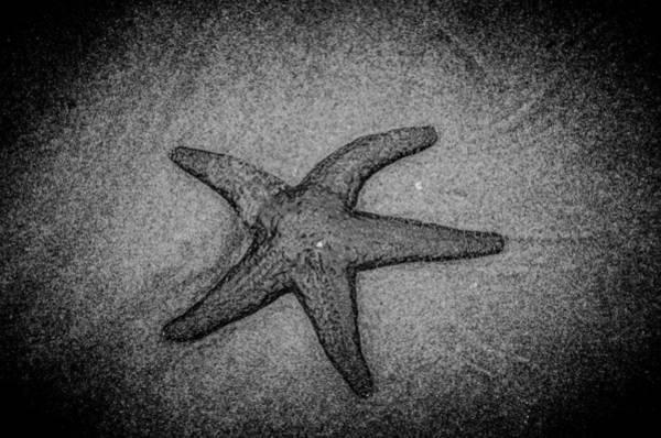Photograph - Black Star I by Roxy Hurtubise