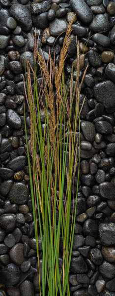 Wall Art - Photograph - Black Stones And Grasses by Steve Gadomski