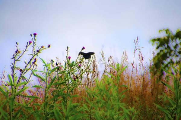 Antietam Photograph - Black Swallowtail Butterfly by Bill Cannon