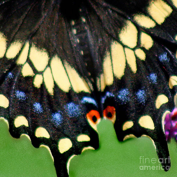 Photograph - Black Swallowtail Butterfly Wing Square 2 by Karen Adams